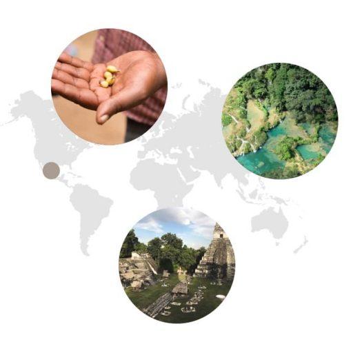 Ursprungsgebiet von Cardamom auf der Weltkarte: Guatemala