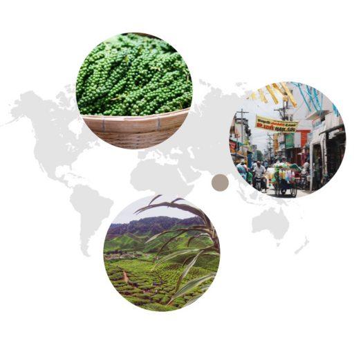 Ursprungsgebiet von grünem Pfeffer auf der Weltkarte: Indien