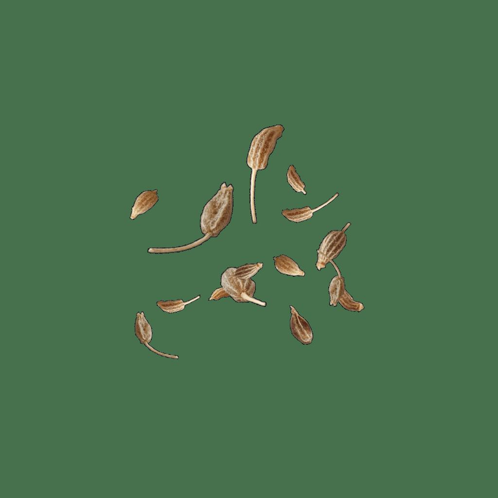 fliegende Anisfruechte