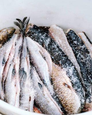 eingesalzene Fische