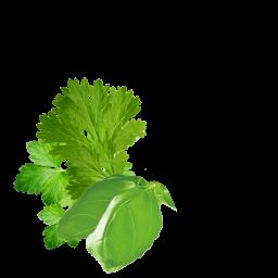 Caucasian Herbs Conent Pl