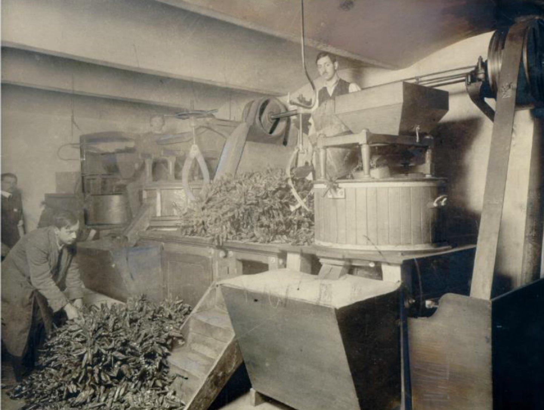Черно-белая фотография: мельница по переработке паприки Kotányi, 1881год